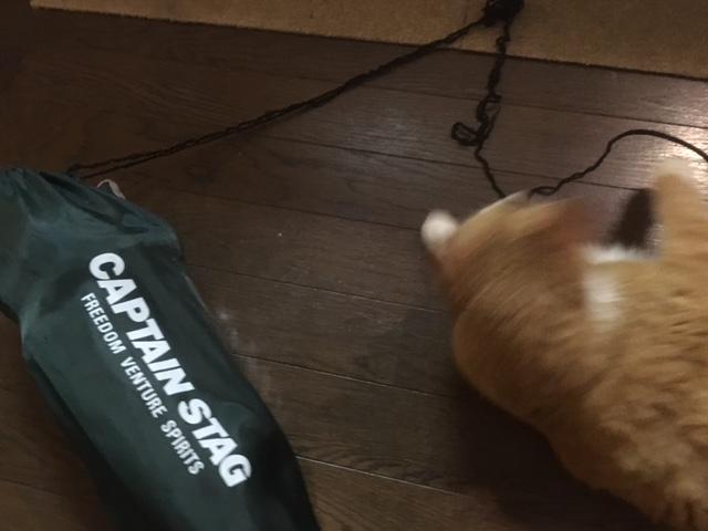 伸び切った紐と猫