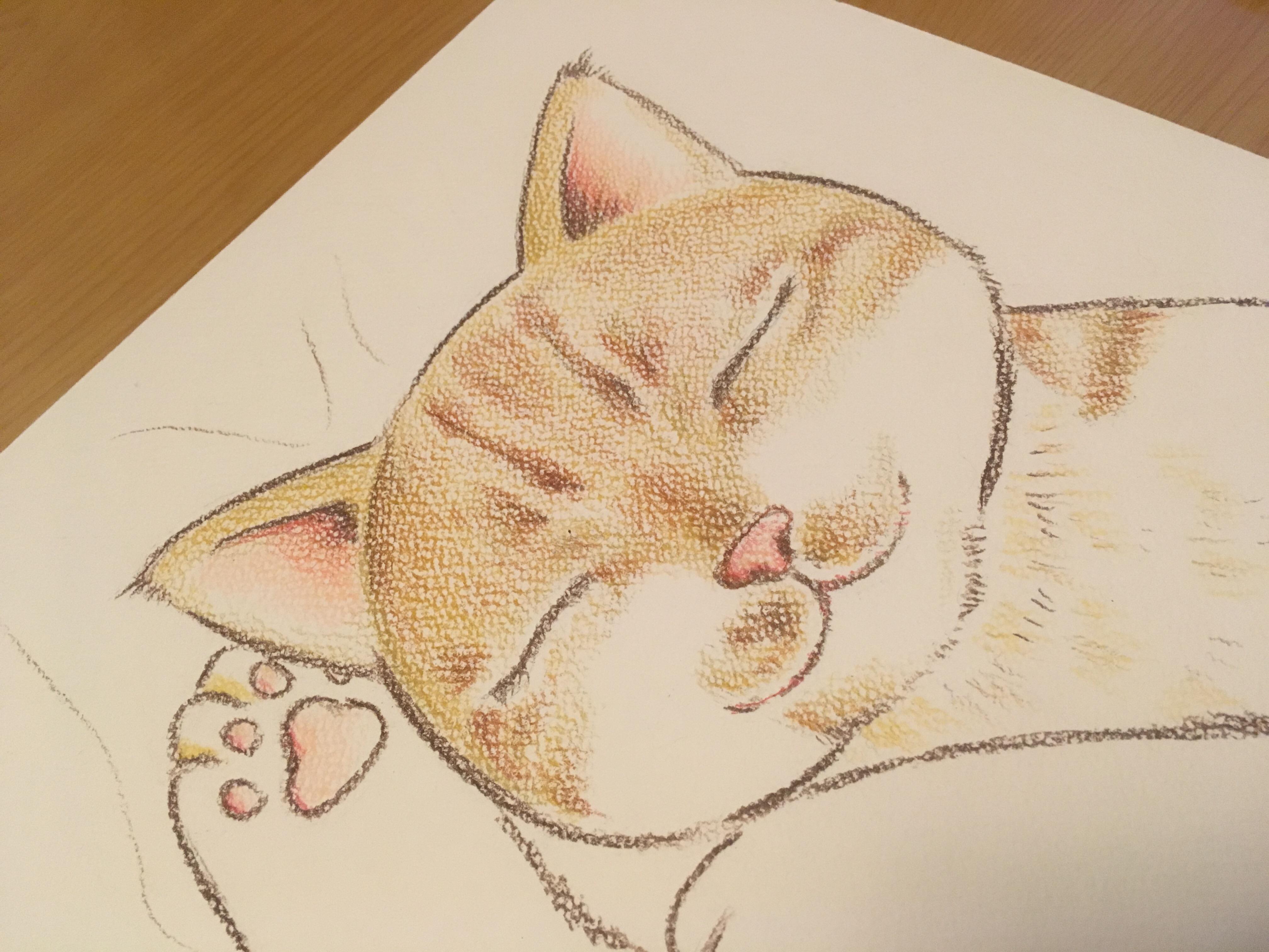 トラ猫の寝顔イラスト