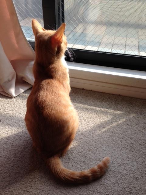 窓際にたそがれる猫