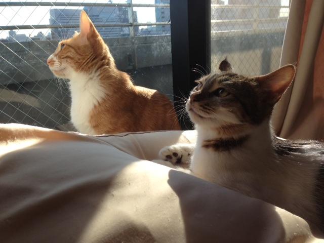 ふたりで仲良く並ぶ猫