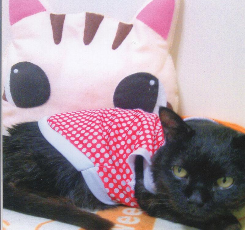 クッションと仲良し黒猫