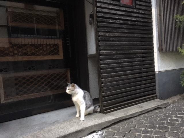 神楽坂の猫さん