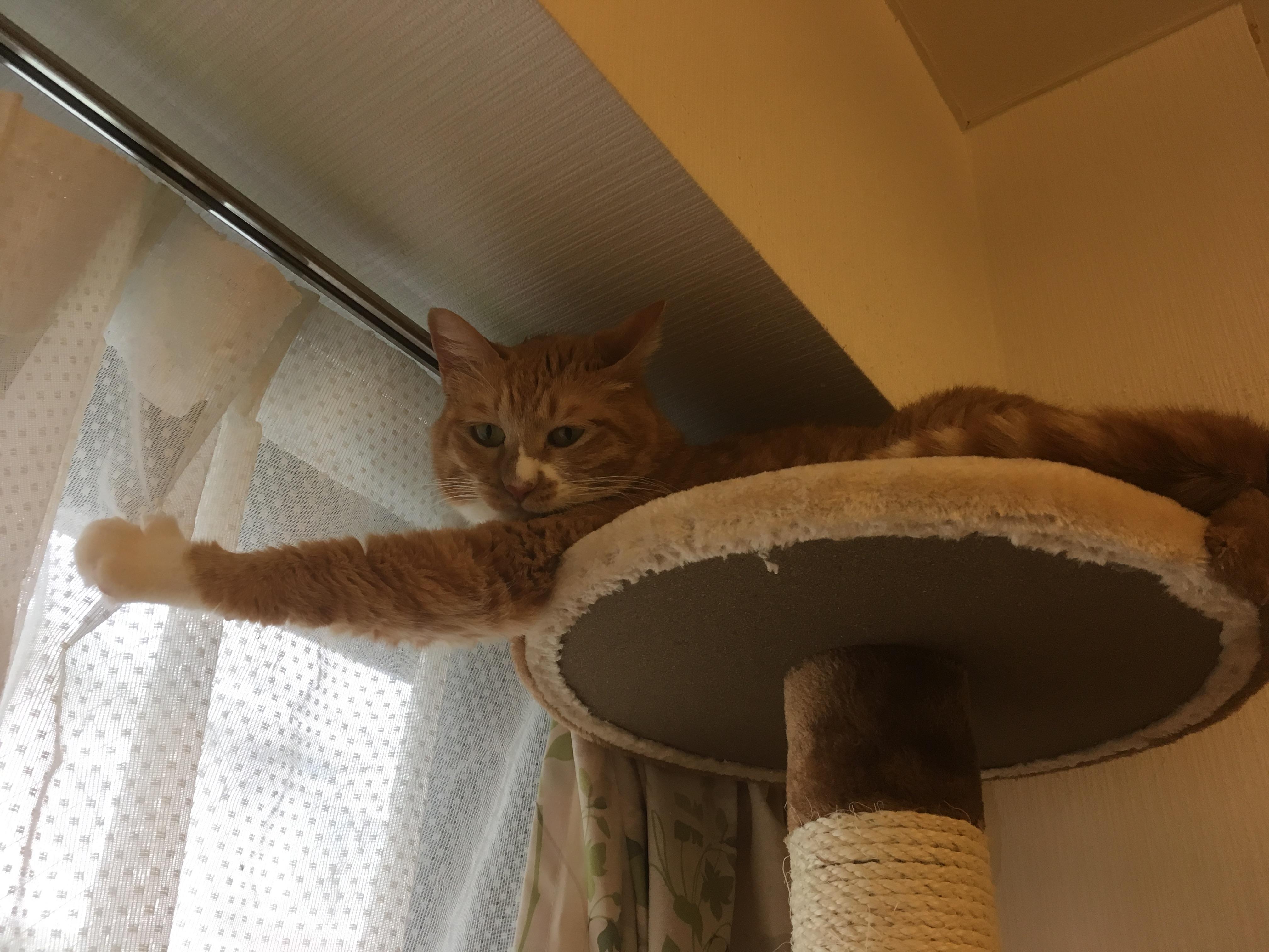 高みの見物見物猫