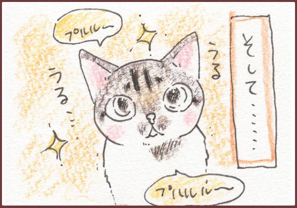 正しい猫の愉しみ方