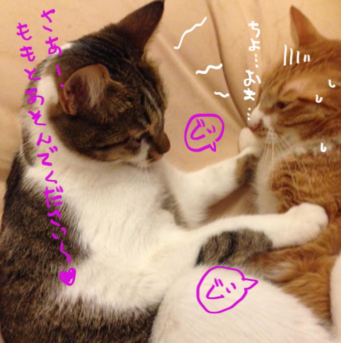 ラブコールする猫2