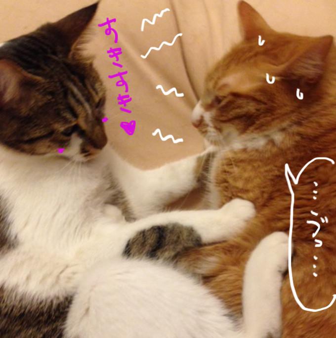 ラブコールする猫3